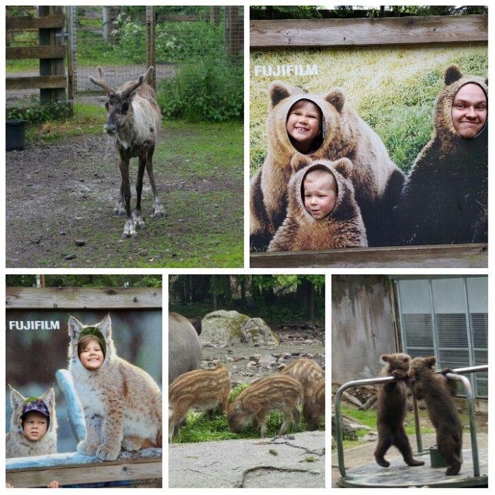 Ähtärin eläinpuistosta